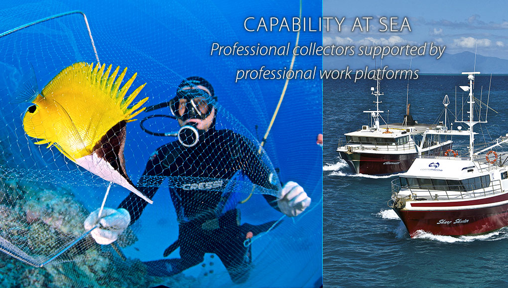 Capability at Sea: Professional collectors supported by professional work platforms