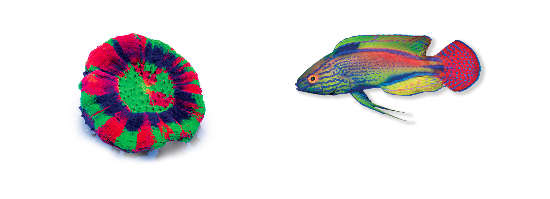 Premium corals and fishes from Down Under
