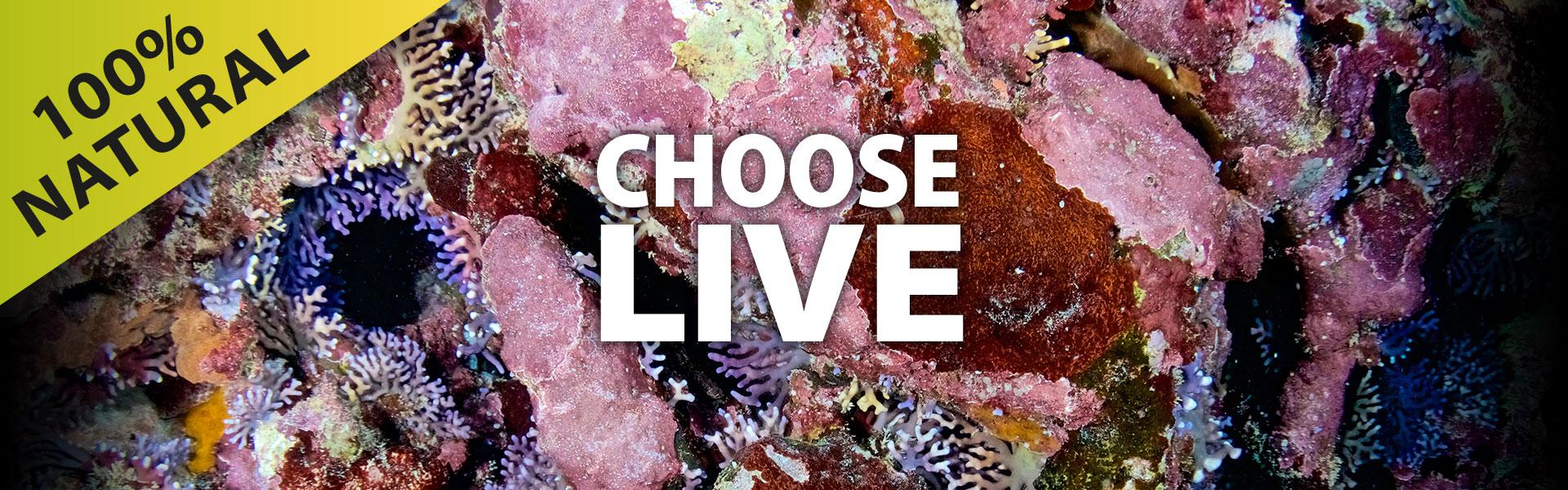 Live-Rock-header2