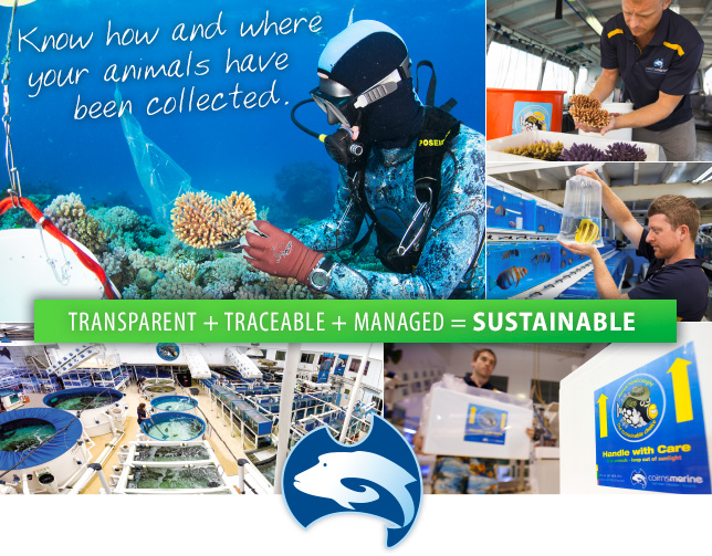 Transparent + Traceable + Managed = Sustainable